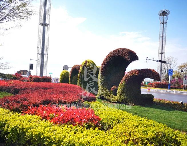 青岛海军节五色草造型